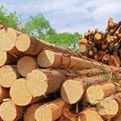Image: Timber Logs